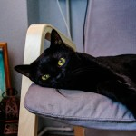 黒猫が好き